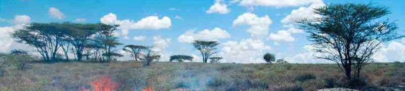 UF2369 Organización y Control de Actuaciones de Extinción de Incendios Forestales